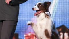 Matisse the dog is the winner of Britain's Got Talent