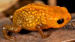 New species of frog discovered