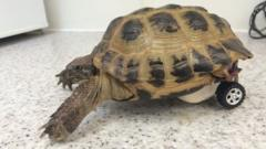 Tortoise called Touche Purnell