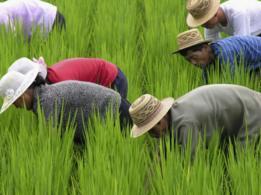 Os trabalhadores norte-coreanos no exterior são empregados principalmente em: agricultura, construção, indústria naval e manufatura