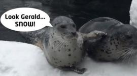 Two seals in the snow