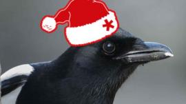 From unlikely friendships with dogs to festive greetings, this magpie has had an eventful year.