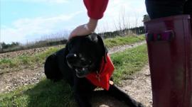 Pal the medical assistance dog