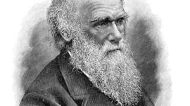 Encantado com a natureza e indignado com a corrupção: o que Charles Darwin achou do Brasil do século 19