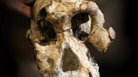 El intrigante hallazgo de un cráneo que cuestiona las ideas que tenemos sobre los ancestros de los humanos