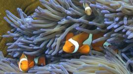 Fish swimming through the coral on Australia's Great Barrier Reef