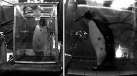 Penguin on a treadmill