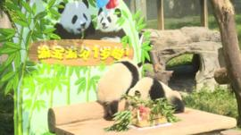 Panda birthday!