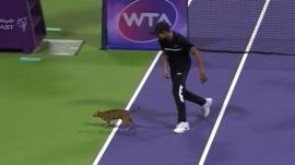 Cat on a tennis court