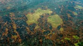 Cómo los incendios de la Amazonía ponen en peligro las metas del Acuerdo de París