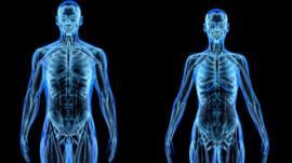 ¿De qué está hecho realmente el cuerpo humano?