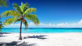 A Caribbean beach with white sand and a palm tree