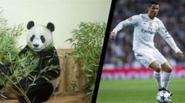 Yang Guang and Cristiano Ronaldo
