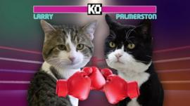 Larry (left) and Palmerston the cat