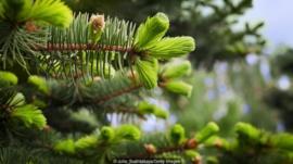 A cidade do Alasca onde 'dinheiro' cresce em árvore