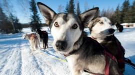 Como cachorros salvaram as vidas de todos os moradores de uma cidade americana
