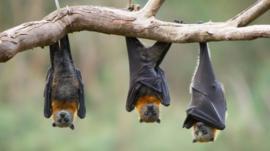 4 lecciones sobre supervivencia que podemos aprender de los murciélagos