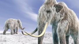 ¿Qué fue lo que realmente barrió a los mamuts de la faz de la Tierra?