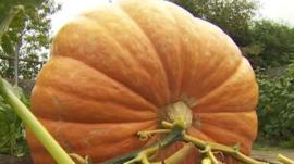 Robert Taylor's pumpkin