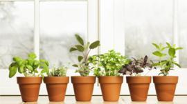 4 problemas de salud comunes que puedes aliviar con plantas