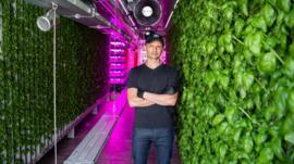 Agricultura vertical: el boom del millonario negocio de las frutas y verduras futuristas que crecen en las ciudades