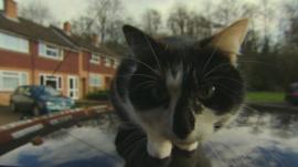Cat sits on a car roof