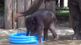 Belle, baby elephant