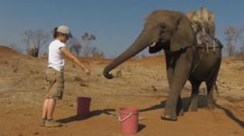 Experimenter with elephant (c) University of St Andrews