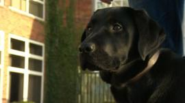 Zeus the trainee guide dog