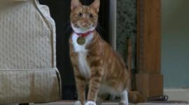 Jock VI the cat
