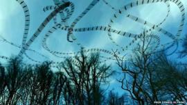 Bird flight patterns