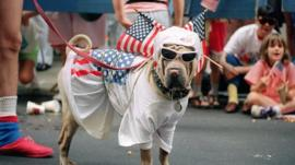 Dog wearing American flags