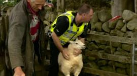 farmer and police officer about to tag sheep