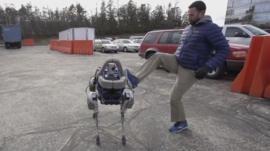 Spot the robot