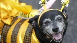 Dog in fancy dress