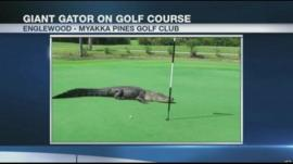 Golfers watched by this four metre alligator on US golf course