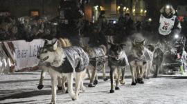 Sled race in Alaska