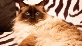 Miggy the cat