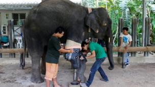 Mosha has her prosthetic leg attached