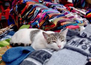 A cat asleep on a pile of coloured fabrics