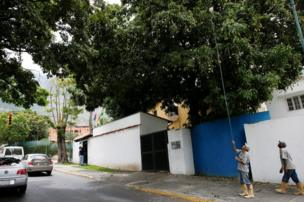 A worker uses a plastic container tied to a stick to dislodge mangoes from a tree in Caracas, Venezuela.