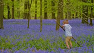 The Christmas Common bluebells smelled divine, says Samantha May who sent this image in