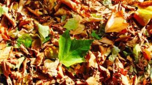 Leaves in Abingdon