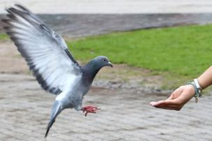 Pigeon and hand