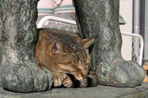 A cat curled up on a plinth