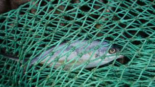 ψάρια που χρονολογούνται από τον κωδικό προσφοράς του Ηνωμένου Βασιλείου