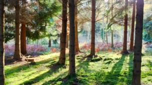 Bagley Woods