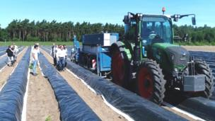 Asparagus pickin robot pulled by tractor up in a gangbangin' field