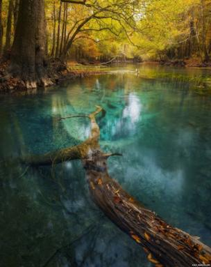 Chipola River, Florida, International Garden Photographer of the Year