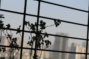 Tulsi and rose plant leaves silhouetted